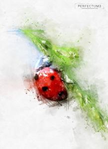 perfectum-3-watercolor-master-photoshop-action44